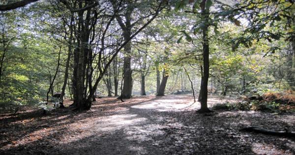 Nether Alderley Woods | Cheshire UK