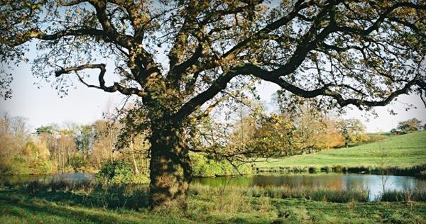 Hare Hill | Nether Alderley, Cheshire UK